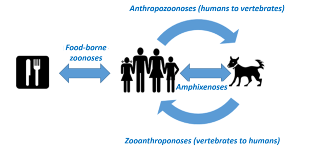 Zoonoses: Hohenheim Research Center for Health Sciences